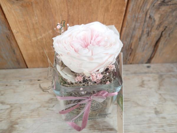 gefriergetrocknete Rose