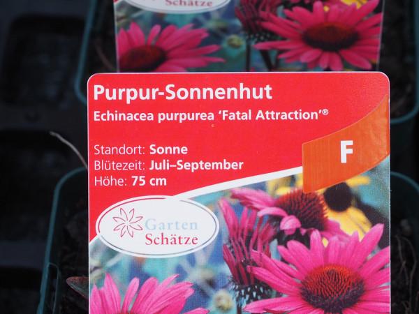 Echinacea purpurea 'Fatal Attraction' ® P 1