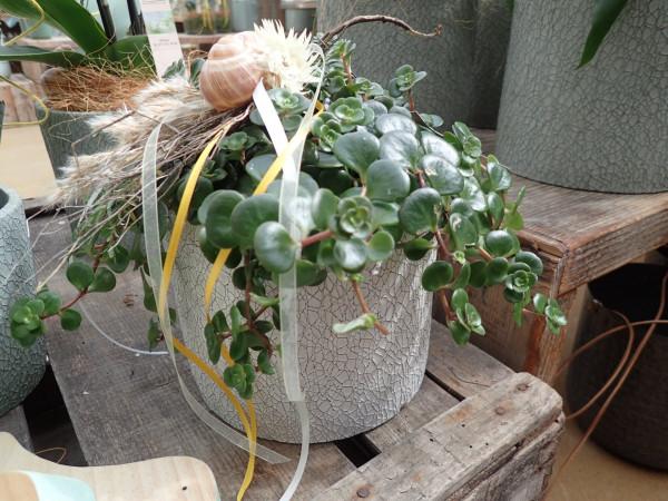 bepflanztes Gefäss
