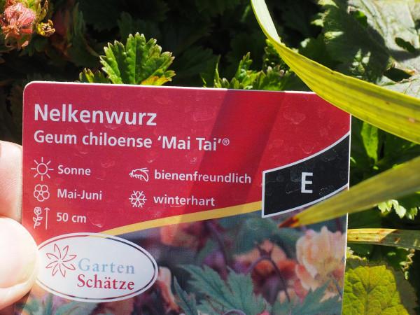 Geum chioense 'Mai Tai'® P 1