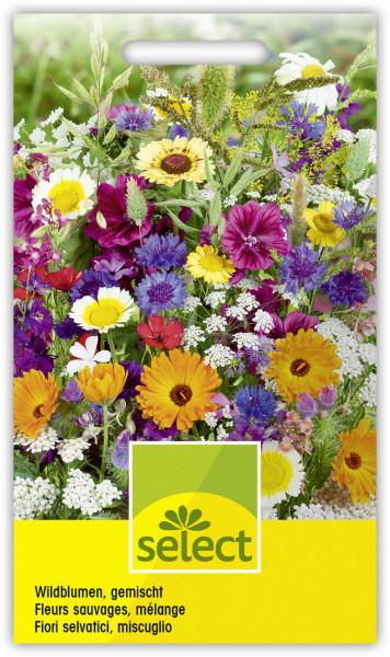 Wildblumen, gemischt