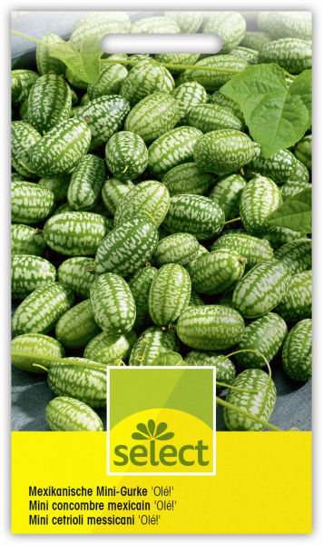 Mexikanische Mini-Gurke 'Olé!'