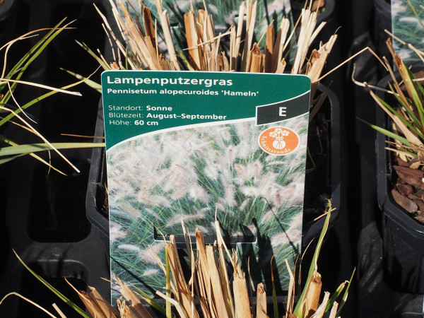 Pennisetum alopec. 'Hameln' P 1