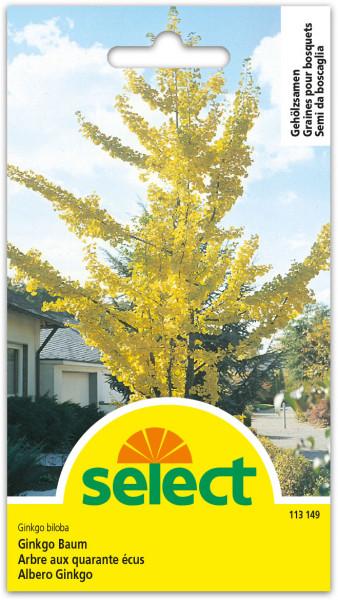 Ginkgo Baum