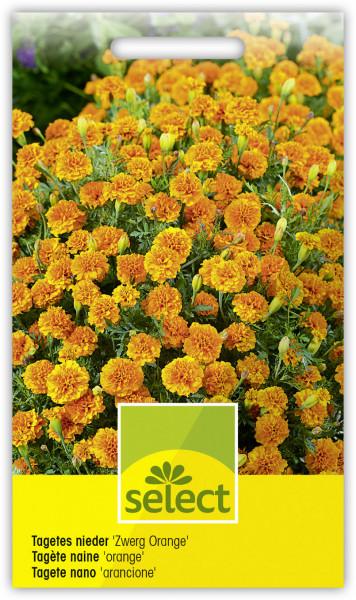 Tagetes nieder 'Zwerg Orange'