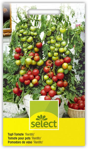 Topf-Tomate 'Rentita'
