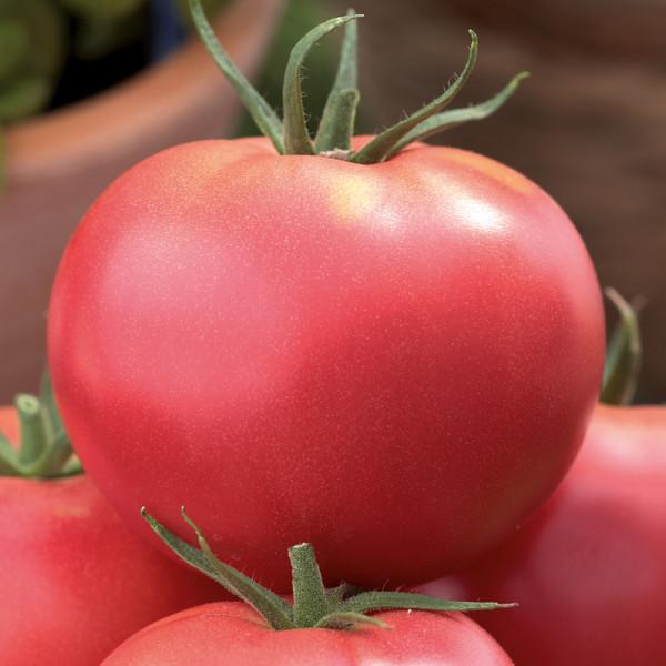Tomaten Imagine/rosa Fleischtomate