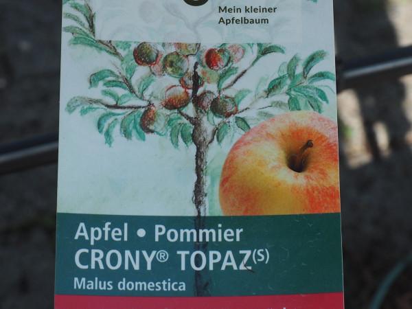 Apfel Crony Topaz
