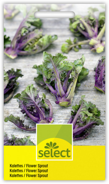 Kalettes / Flower Sprout