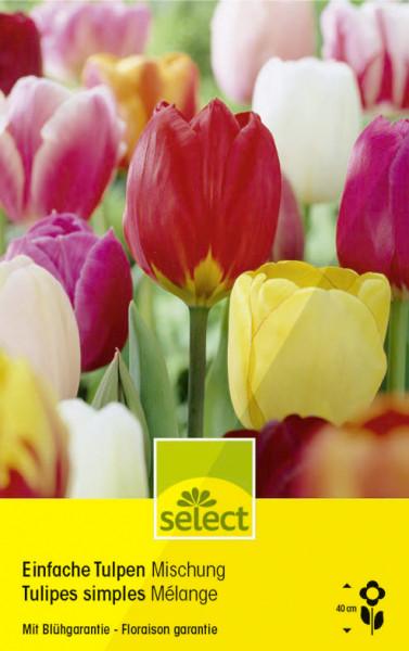 Einfache Tulpen, Mischung