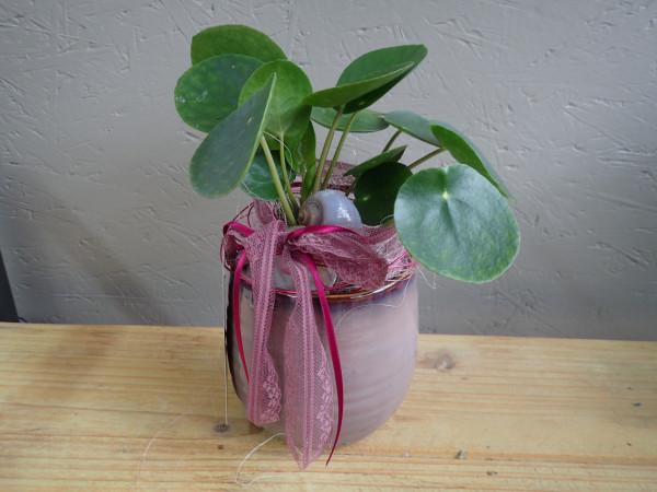 bepflanztes Gefäss 20