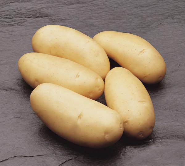 Saatkartoffeln 'Annabell' 2.5kg