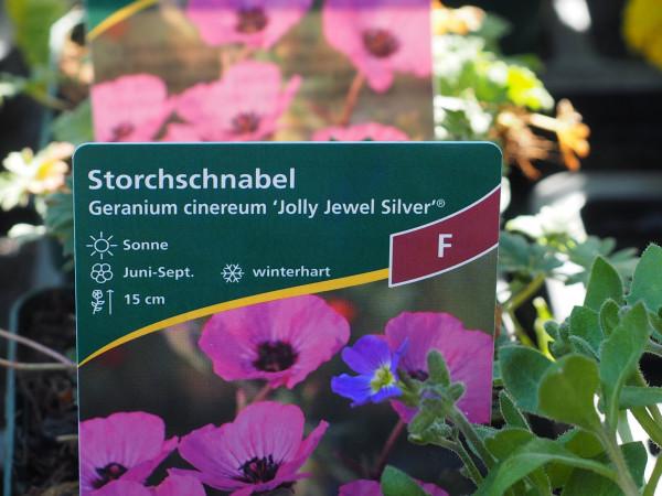 Geranium cinereum 'Jolly Jewel Silver'