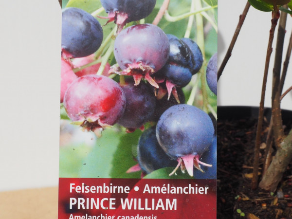 Felsenbirne Prince William