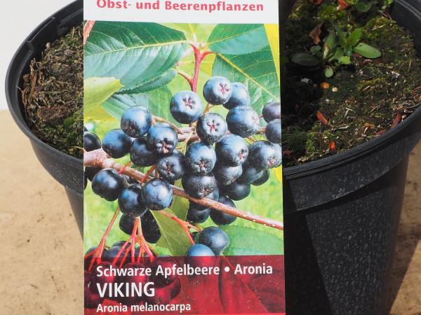 Schwarze Apfelbeere Viking
