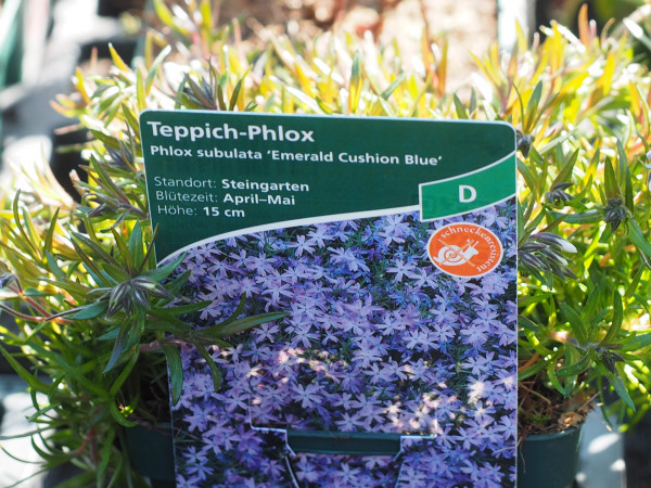 Phlox subulata 'Emerald Cushion Blue' P 1