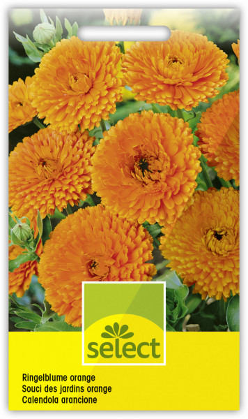 Ringelblume orange