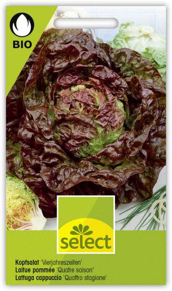 Kopfsalat 'Vierjahreszeiten'