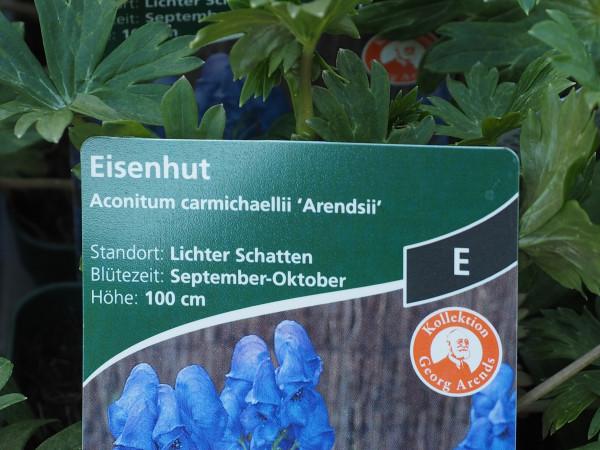 Aconitum carmichaelii 'Arendsii' P 1