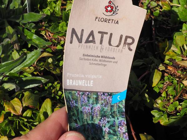 Prunella vulgaris P 1 WS