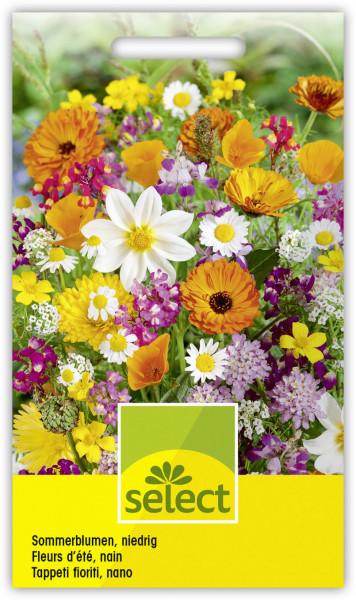 Sommerblumen, niedrige Mischung