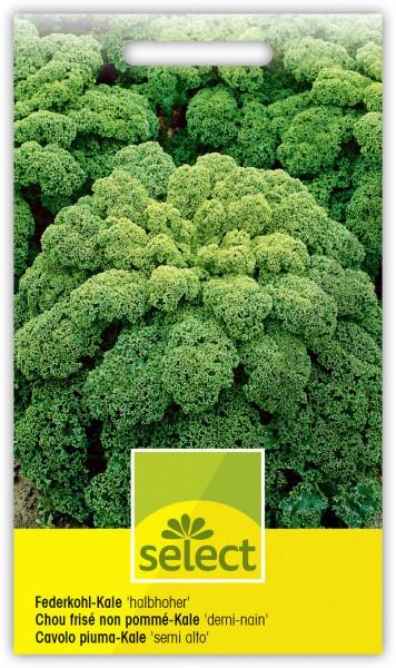 Federkohl halboher 'Kale'