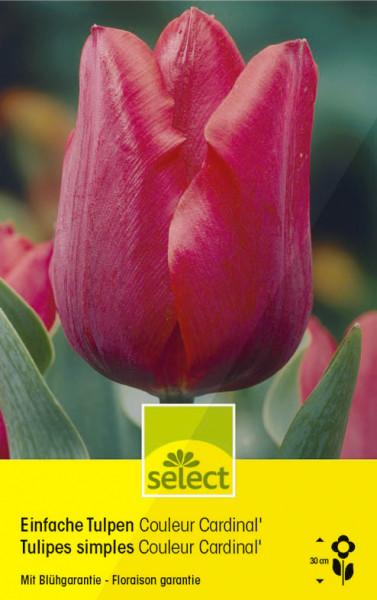 Einfache Tulpen 'Couleur Cardinal'
