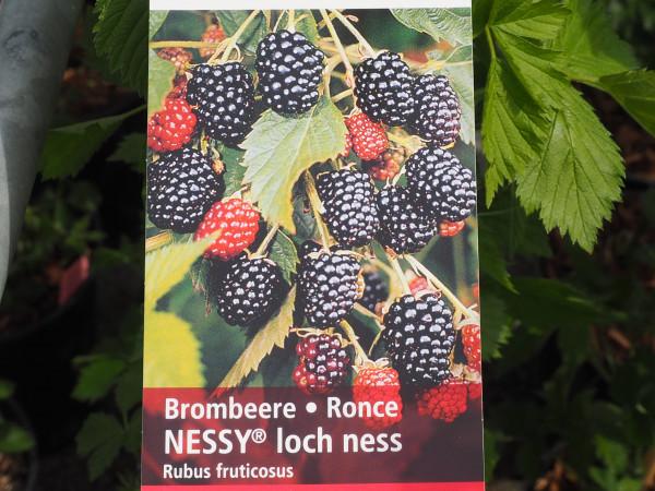 Brombeeren Nessy loch ness
