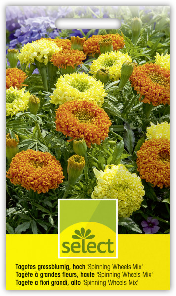 Tagetes grossblumig, hoch 'Spinning Wheels Mix'