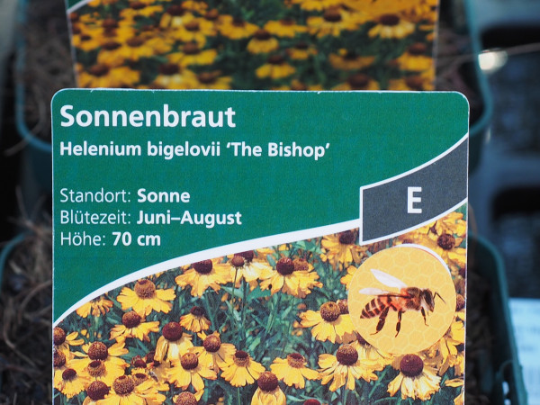 Helenium bigelovii 'The Bishop'