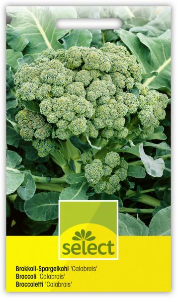 Brokkoli-Spargelkohl 'Calabrais'