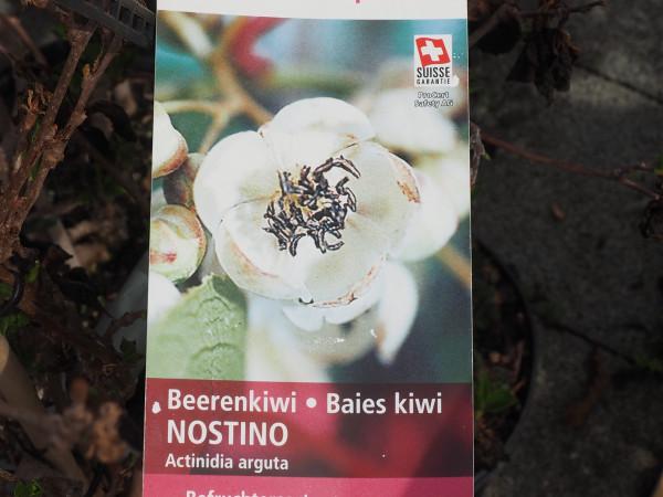 Kiwi Beerenkiwi Nostino