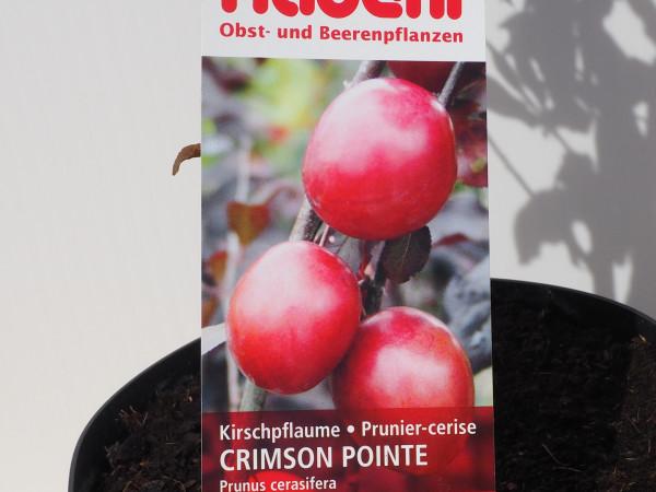 Kirschpflaume Crimson Pointe