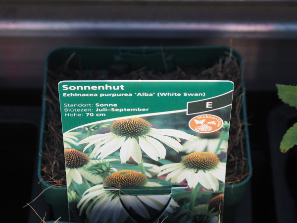Echinacea purpurea 'Alba' (Syn.'White Swan') P 1