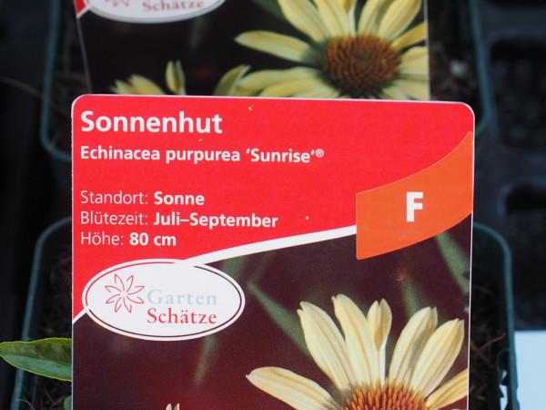 Echinacea purpurea 'Sunrise' ® P 1