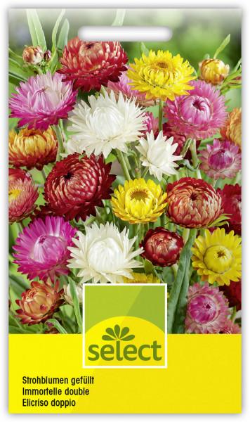 Strohblumen gefüllt