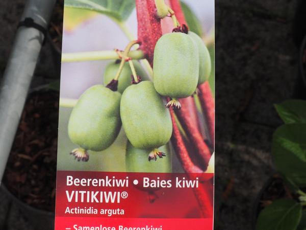 Kiwi Beerenkiwi Vitikiwi