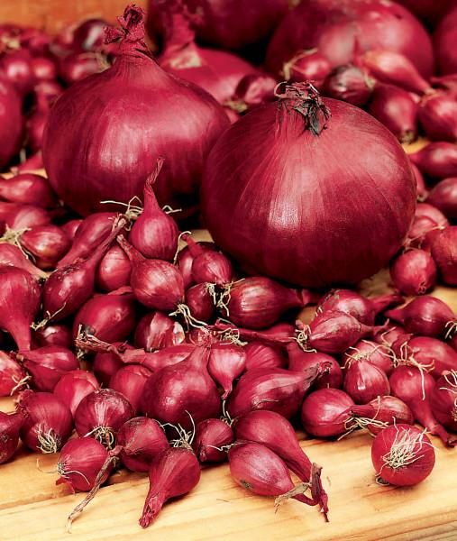 Steckzwiebel 'Rote', 250 g