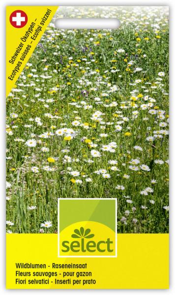 Wildblumen - Raseneinsaat