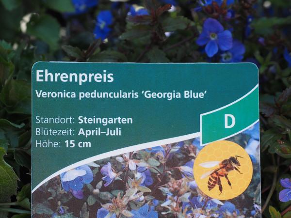 Veronica peduncularis 'Georgia Blue' P 1