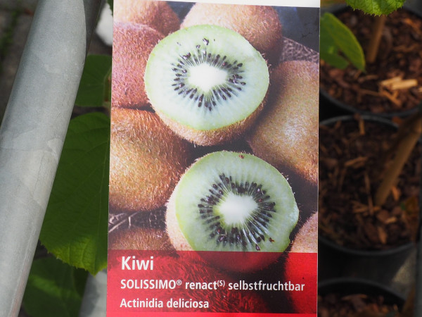 Kiwi Solissimo renact selbstfruchtbar