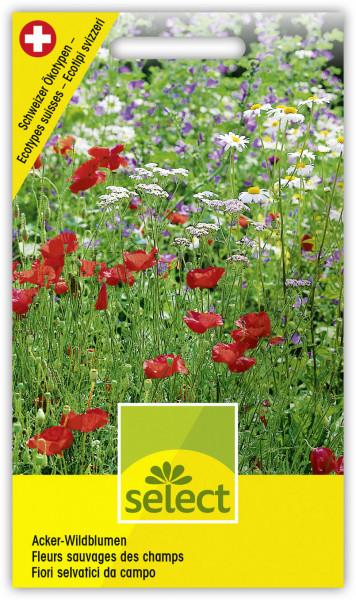 Acker-Wildblumen