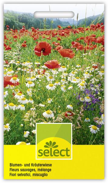 Blumen- und Kräuterwiese
