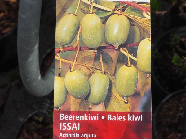 Kiwi Beerenkiwi Issai
