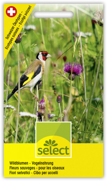Wildblumen - Vogelnahrung