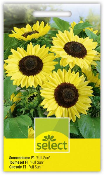 Sonnenblume F1 'Full Sun'