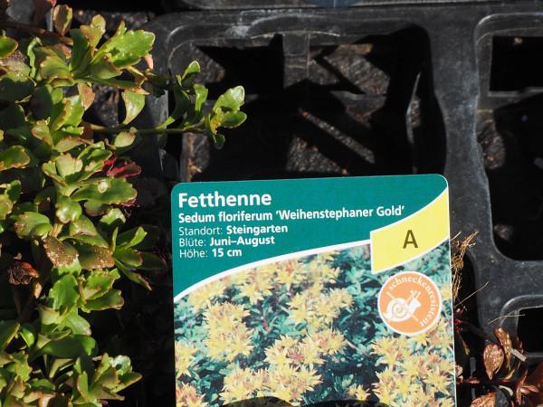 Sedum floriferum 'Weihenstephaner Gold' P 0,5
