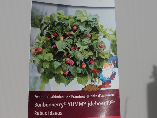Himbeeren Bonbonberry YUMMY jdeboer19