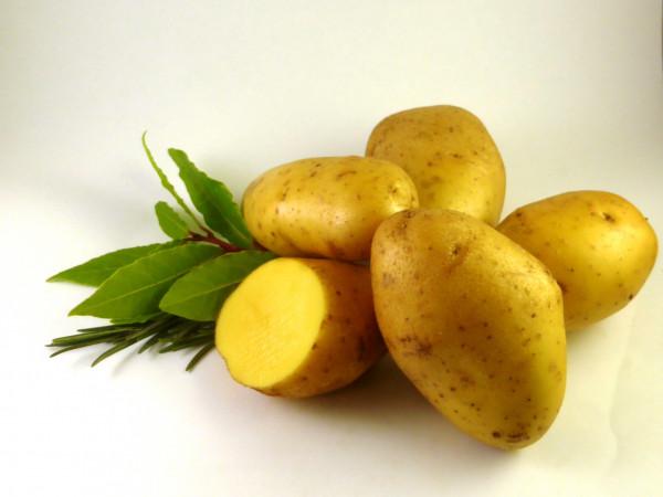 Saatkartoffeln 'Agria', 2.5 kg