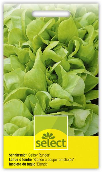 Schnittsalat 'Gelber Runder'
